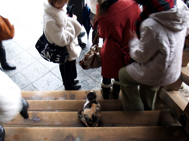 天橋立・文殊堂の猫1