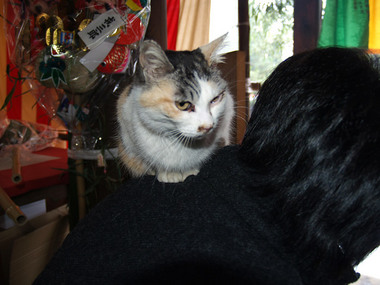 天橋立・文殊堂の猫2