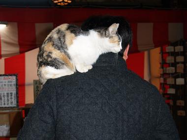 天橋立・文殊堂の猫3